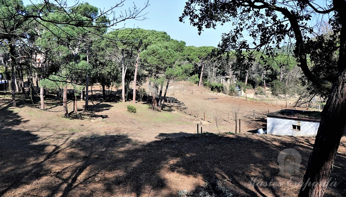 Views of the property