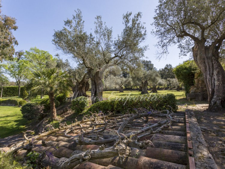 The surroundings of the pool with a field of old olive trees