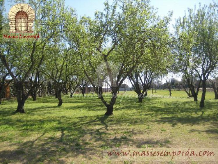 Vista de los campos de olivos de la propiedad