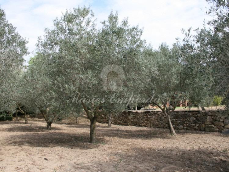 Campo de olivos adjuntos a la casa.