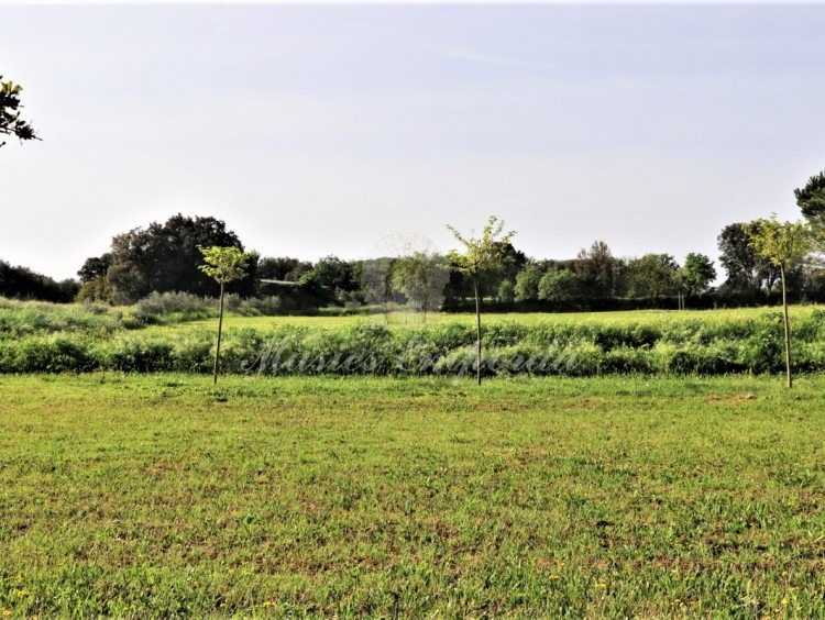General view of the fields of the plot